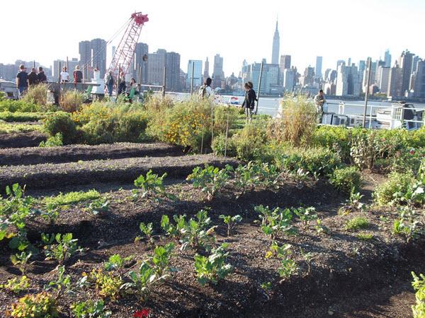 Eagle street rooftop farm
