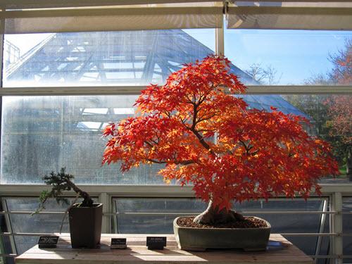 musee bonsai