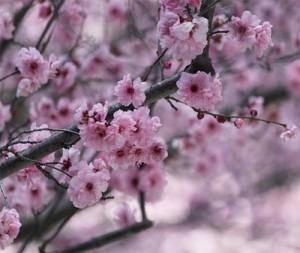 visite printemps